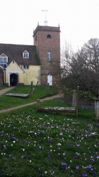 Minstead in spring